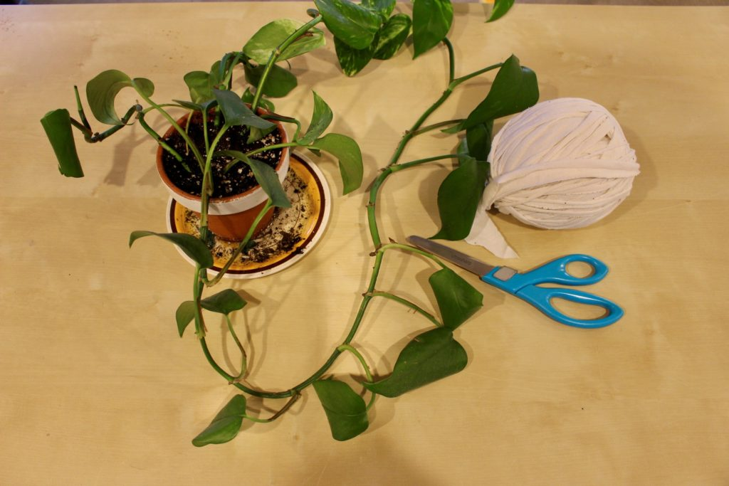 Craft A Diy Plant Holder Goodwill Akron